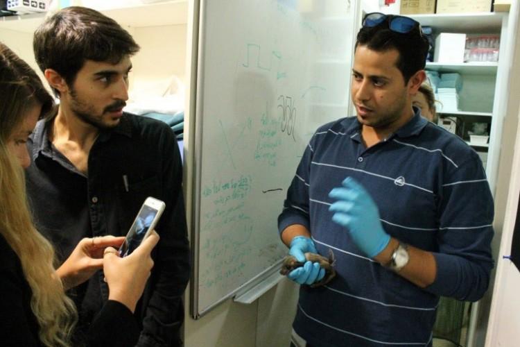 סטודנט למחקר של פרופ' נחום אולונובסקי מציג את העטלף במעבדה