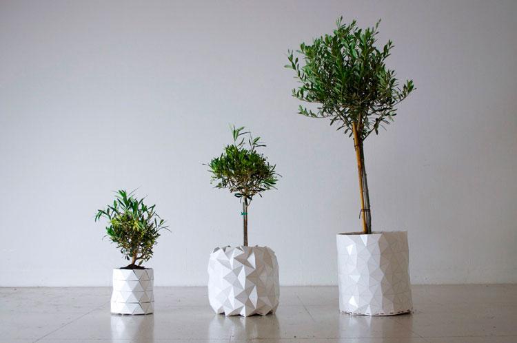 עציץ שגדל עם הצמח של Studio ayazkan. צילום: שיר שמואלי