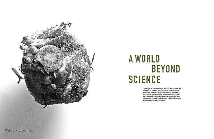סקיצות למגזין חקלאות ביו דינמית