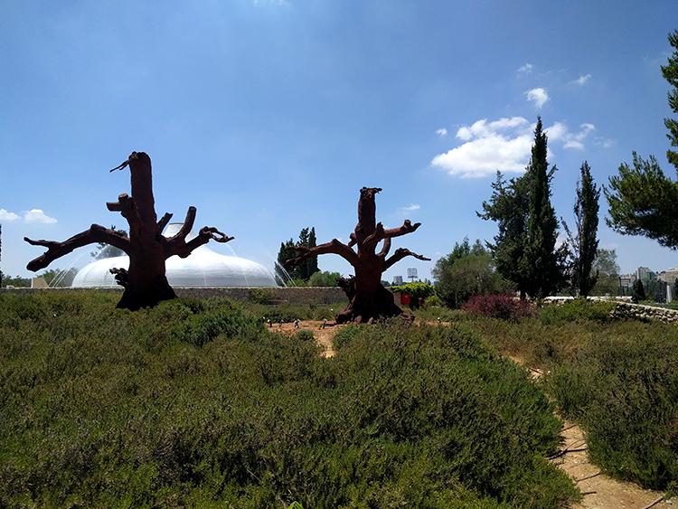 עצי החלודה בגן הפסלים