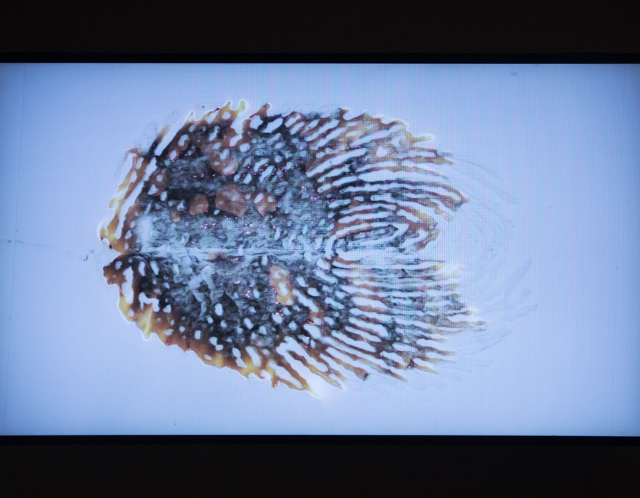 ״לא יכול לשים את האצבע״ עבודתו של האמן גל וינשטיין. טביעת האצבע שנשרפת בהדרגה. צילום: מאיה נקר