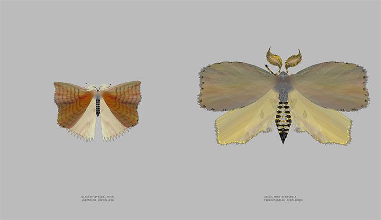 """""""Moth Generator"""", לורן שמידט וקטי רוז פיפקין, (Loren schmidt  Katie Rose Pipkin) 2"""
