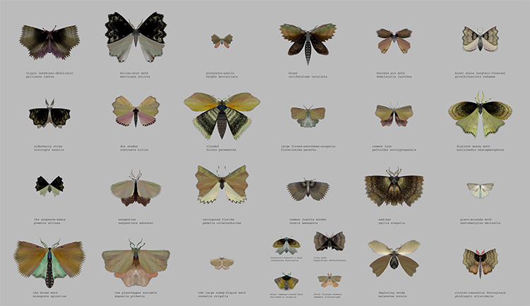 """""""Moth Generator"""", לורן שמידט וקטי רוז פיפקין, (Loren schmidt Katie Rose Pipkin) 3"""
