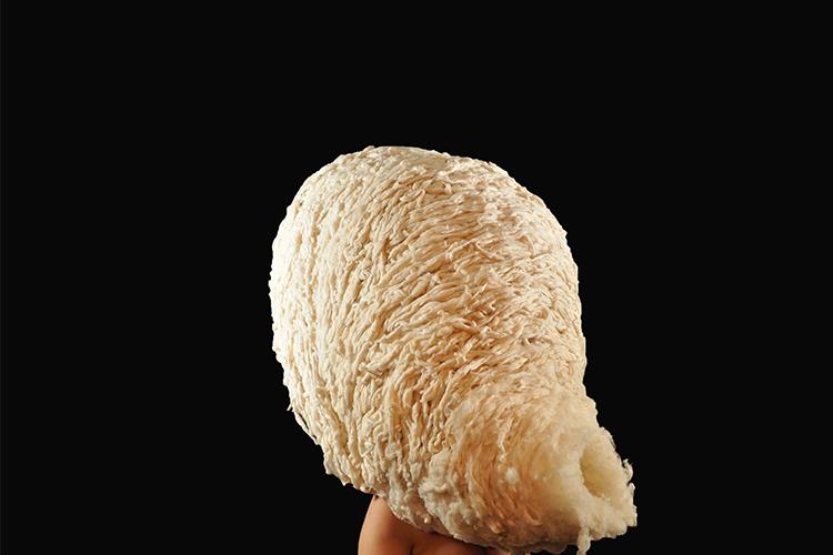 מעטפת הראש של לין ברכר, בהנחיית גל גאון ורותם אוטבייב גיא. צילום: לין ברכר