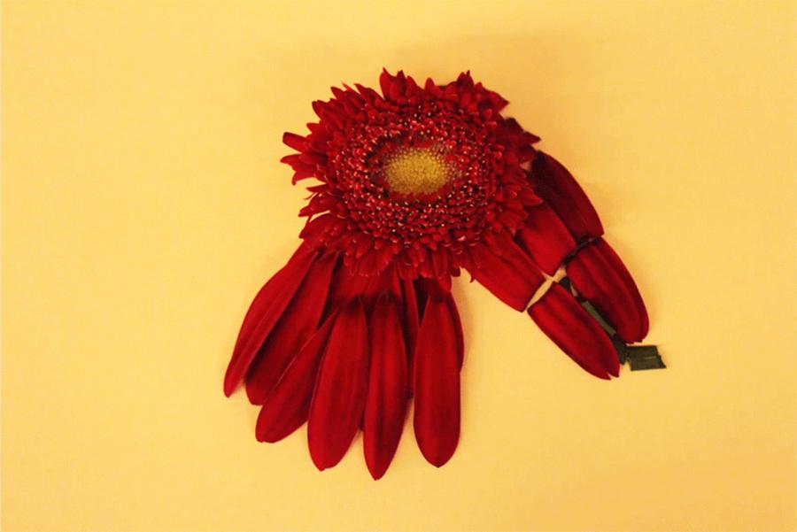 גיפ מיתוג לחנות פרחים ע״פ 12 מזלות(1), רותם פינס פז