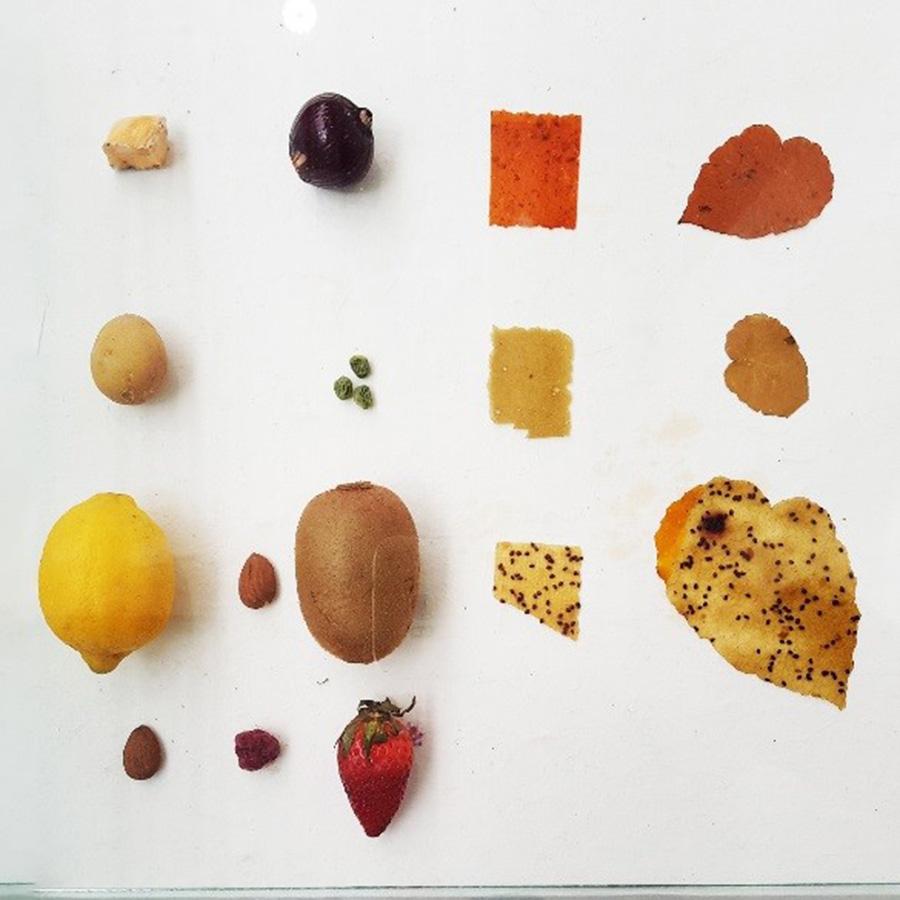 מחקר חומרי בפירות כחומר גלם - תערוכת RONG