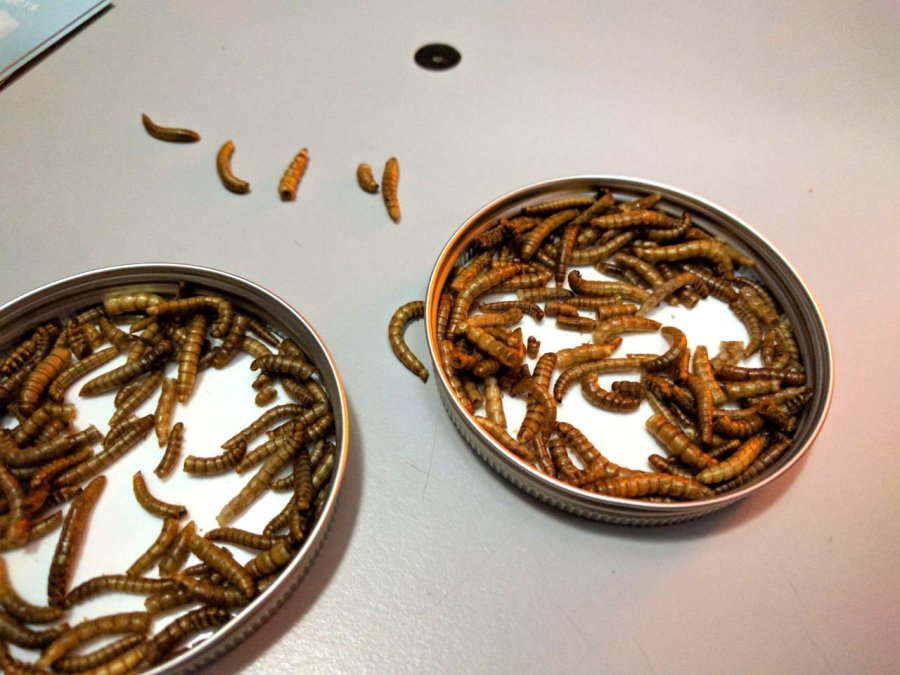 תולעי מאכל, תוצר מכוורת התולעים בעיצובה של קתרינה אונגר. צילום: תומר בלושינסקי