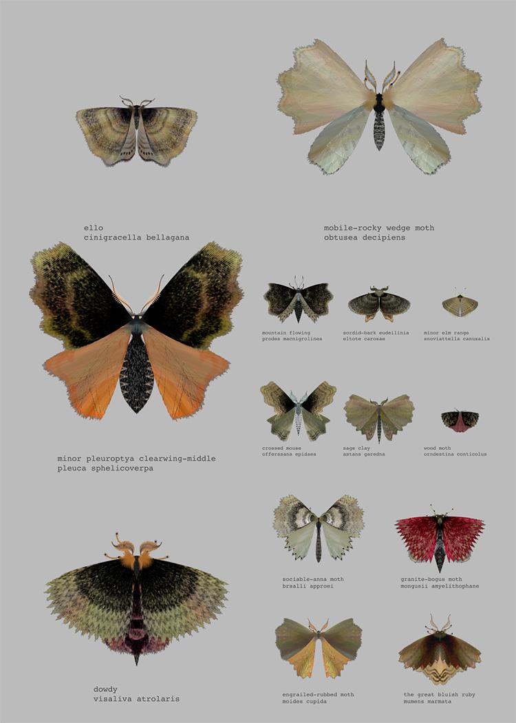"""""""Moth Generator"""", לורן שמידט וקטי רוז פיפקין, (Loren schmidt  Katie """"Moth Generator"""""""
