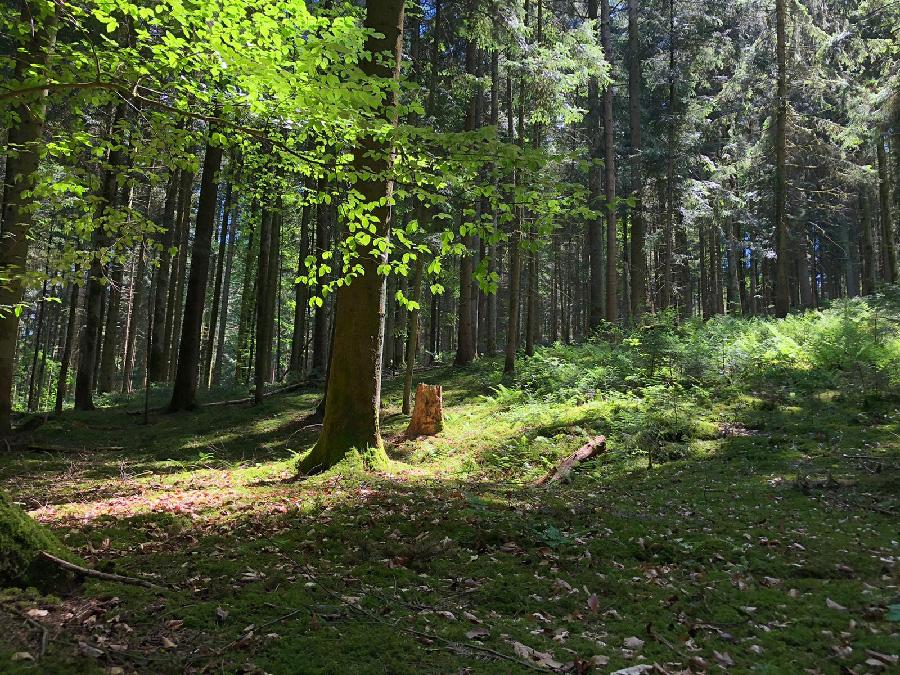 היער הקסום. צילום: רון חדד