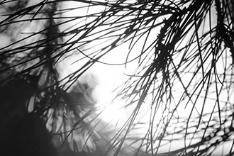 מחושך לאור: הילות האור